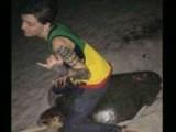 _tartaruga